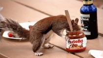Nutella-squirrel